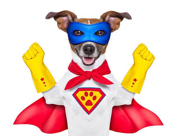super-helden hund - cartoon kostüme stock-fotos und bilder