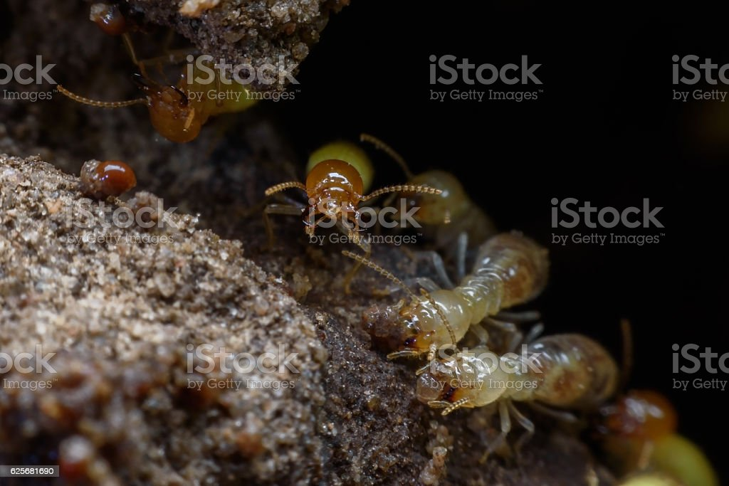 Super macro image of horde of termites building their nest stock photo