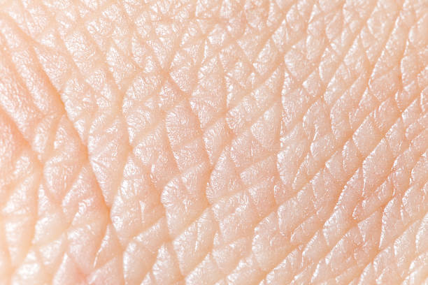 super macro texture of human skin - human skin stock photos and pictures