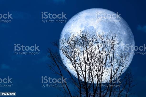 Photo of super moon back silhouette dry tree in the night sky