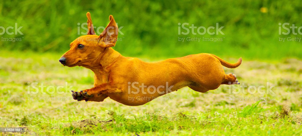 Super Red ! stock photo