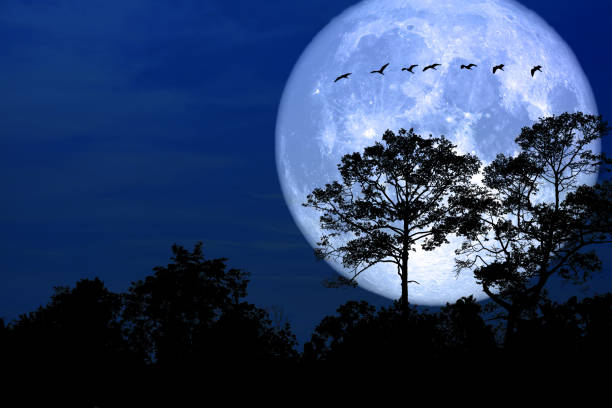 super snow moon back silhouette bird in field night sky stock photo