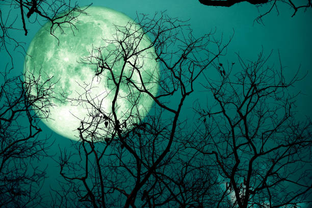super sturgeon green moon and silhouette tree in the night sky stock photo