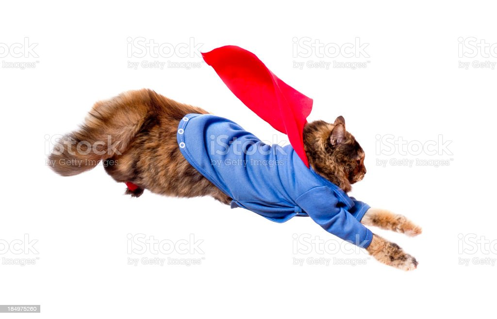 Supercat in flying action stock photo