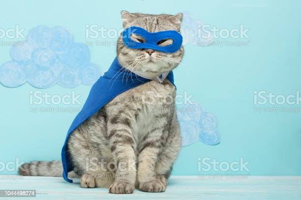 Superhero cat scottish whiskas with a blue cloak and mask the concept picture id1044498274?b=1&k=6&m=1044498274&s=612x612&h=2sn1en8cvl t6xthk6iiehlkopxidsrdy80qziazyju=