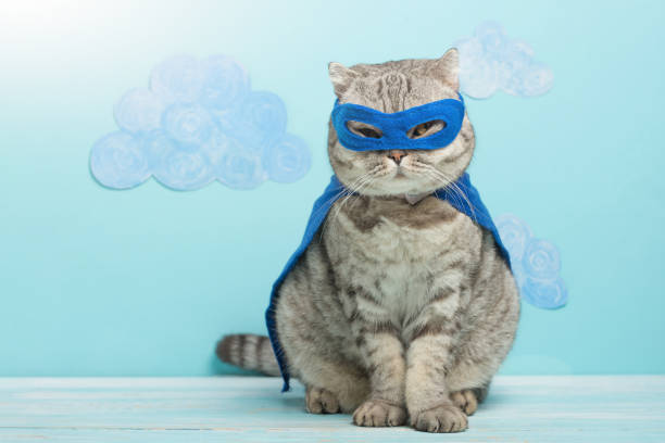 superhero cat, Scottish Whiskas with a blue cloak and mask. The concept of a superhero, super cat, leader superhero cat, Scottish Whiskas with a blue cloak and mask. The concept of a superhero, super cat, leader halloween cat stock pictures, royalty-free photos & images