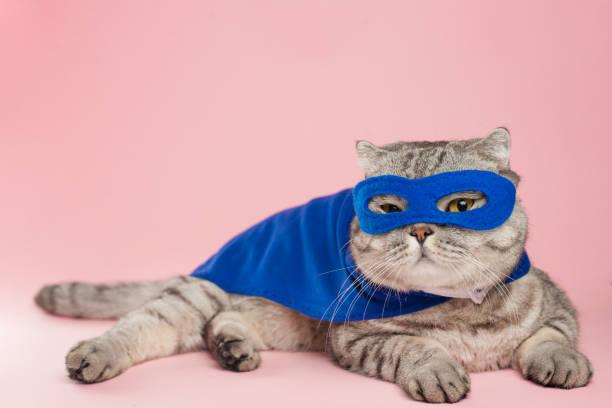 Superhero cat scottish whiskas with a blue cloak and mask the concept picture id1054662180?b=1&k=6&m=1054662180&s=612x612&w=0&h=muxbxtnk0phiec8nil59gg9nkf9uiyjw7uwnx7qdau4=