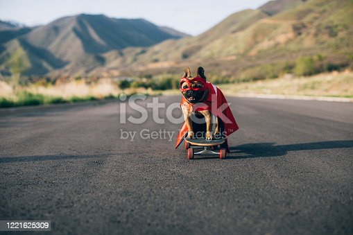 A French Bulldog is dressed up as a superhero dog standing on a skateboard and ready to conquer the enemy, namely cats and criminals. Image taken in Utah, USA.
