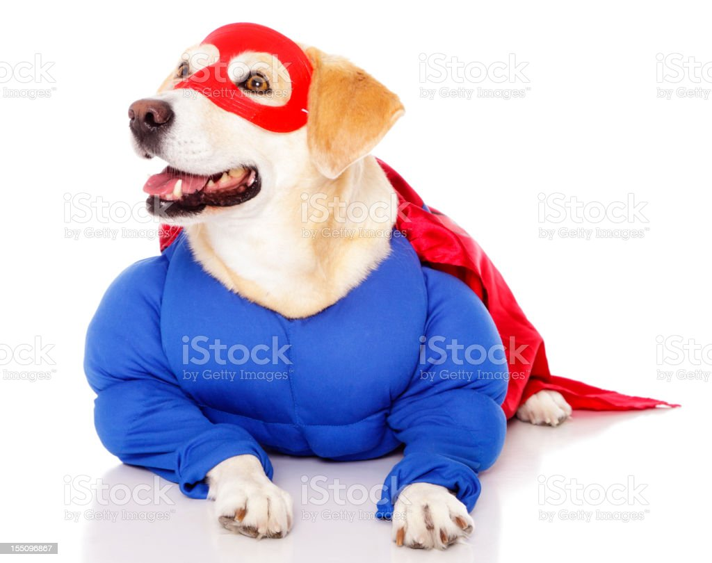 Superhero Dog stock photo
