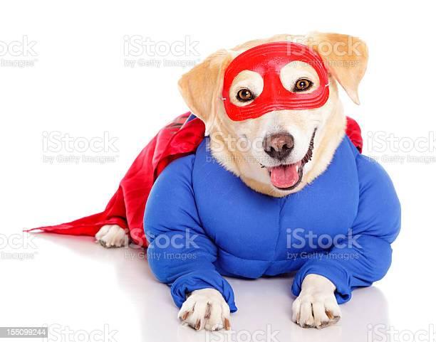 Superhero dog picture id155099244?b=1&k=6&m=155099244&s=612x612&h=o9v7b02mdtw zrvhdewvw2hpbexfkzzozbb6i4v0e s=