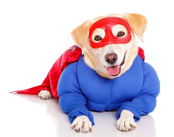 Superhero dog picture id155099244?b=1&k=6&m=155099244&s=612x612&w=0&h=lv9oqwvotktr8hpxabut74ou12xc1gxu5k6seiunkrc=