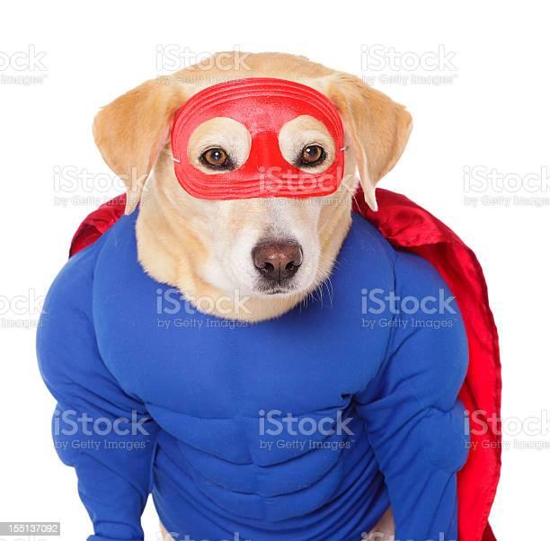 Superhero dog picture id155137092?b=1&k=6&m=155137092&s=612x612&h=svlfbeex3ulvmftndx37tbpvgs1h6ks4mtnuv8alpy8=
