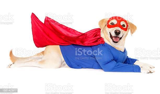 Superhero dog picture id155142977?b=1&k=6&m=155142977&s=612x612&h=inbusqzxb2lqujvwfid2bvmfzdkvti7uwfxctvi8nn8=