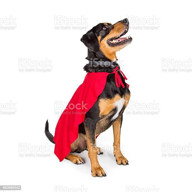 Superhero dog sitting to side looking up picture id592685542?b=1&k=6&m=592685542&s=612x612&h=bpbb6dyzrkhf1gjhp6sjotlaj2k2a3moomkocnhqbf4=