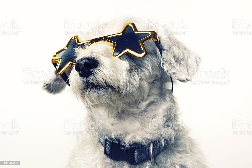Superstar Celebrity Dog stock photo