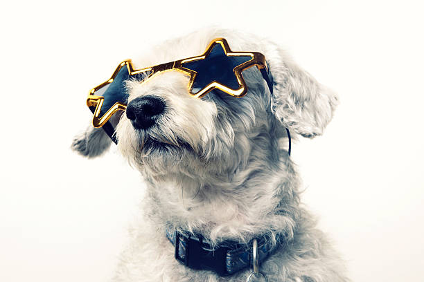 superstar celebrity dog - fame stock photos and pictures