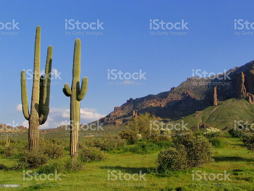 Superstition Mountains and Sahuaro royalty-free stock photo