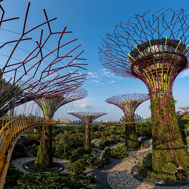 Supertrees im Gardens by the Bay – Foto