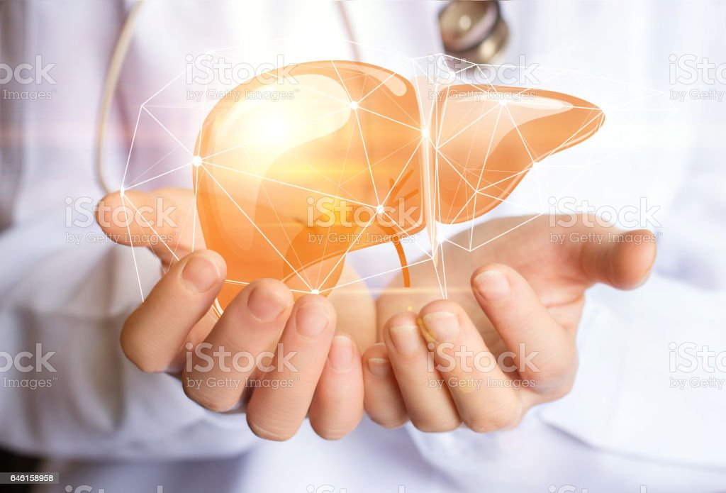 Support healthy liver. stock photo