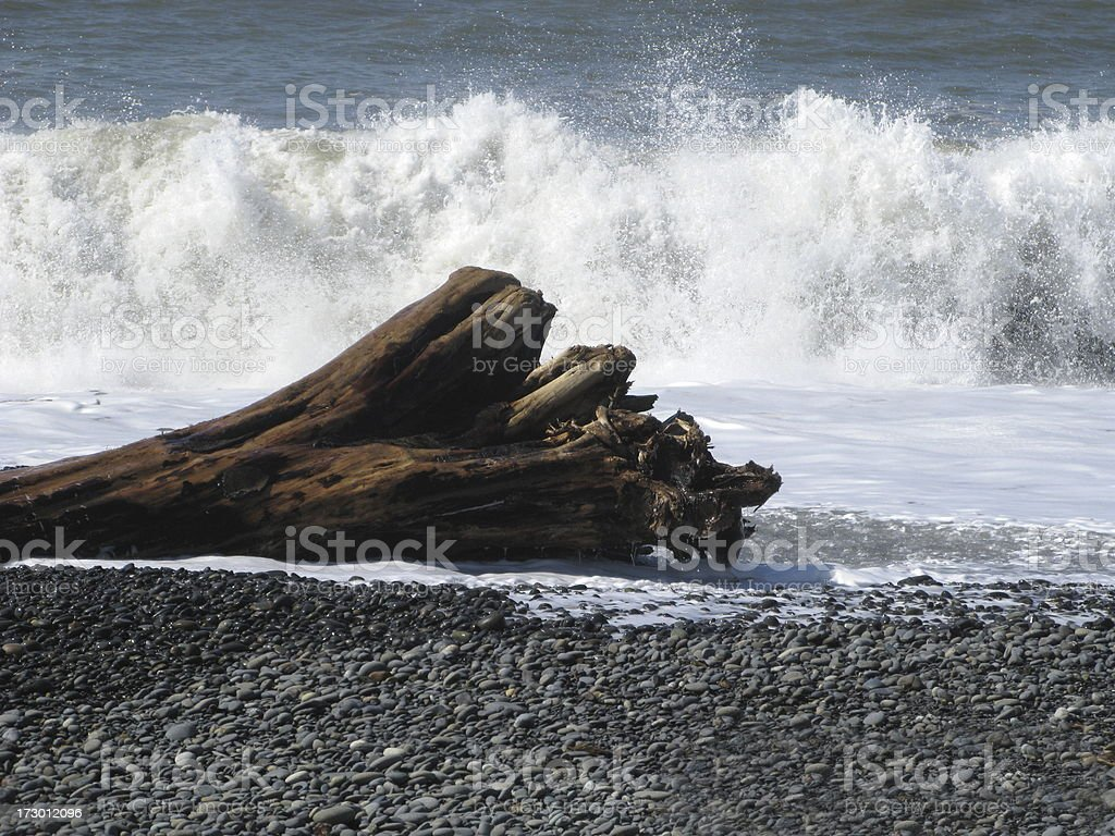 Surf Pacific Coast Tree Log royalty-free stock photo