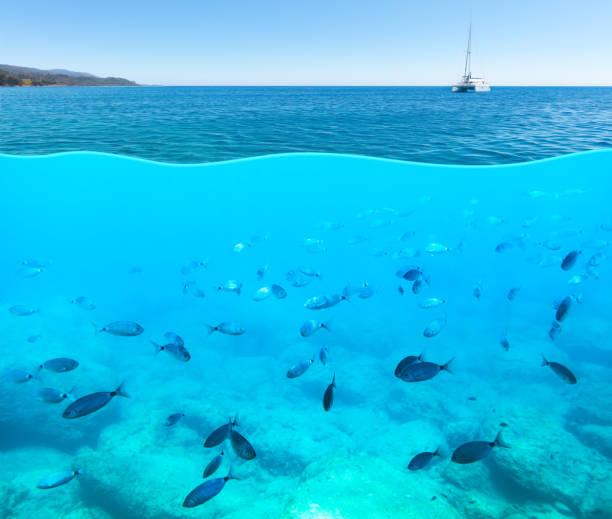 surface and underwater view of mediterranean sea. - under the sea fish foto e immagini stock