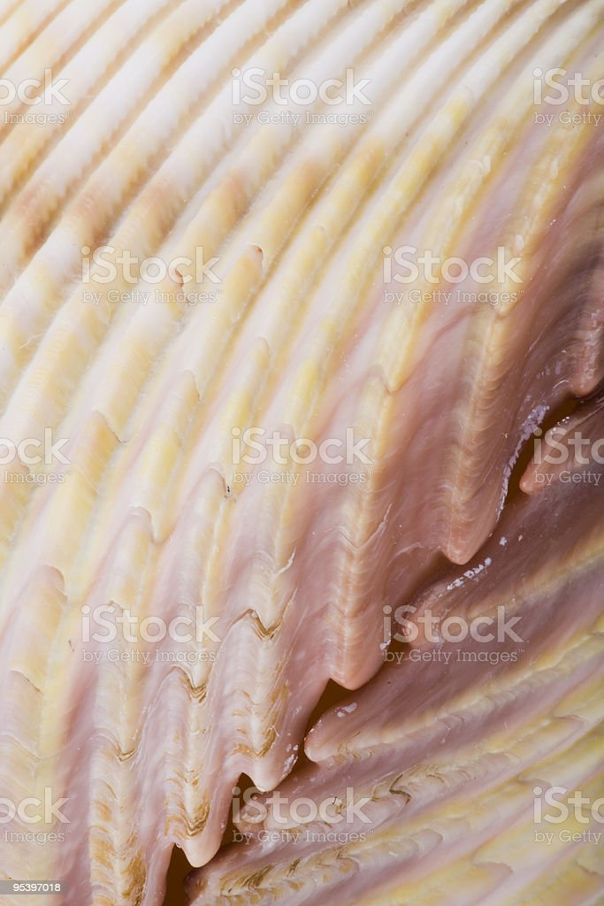 Oberfläche einer shell Lizenzfreies stock-foto