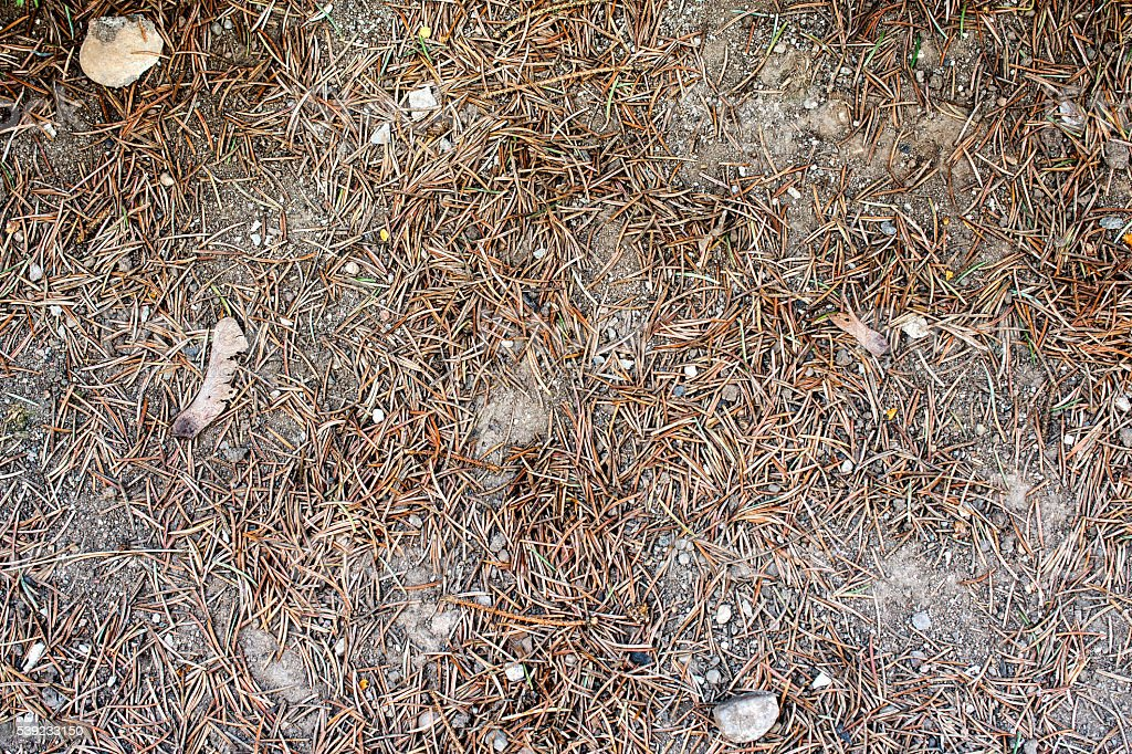 surface of clay and pine needles - texture, background 7 foto de stock libre de derechos