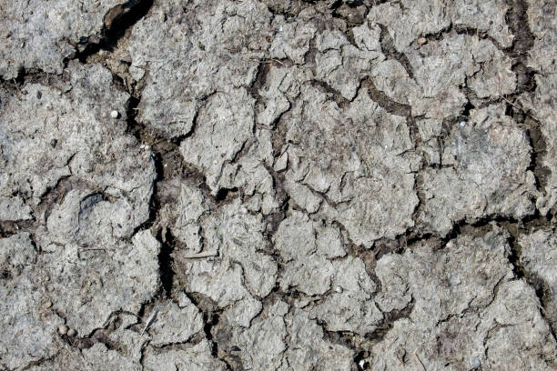 Surface of cracked dry soil with a high salt content stock photo
