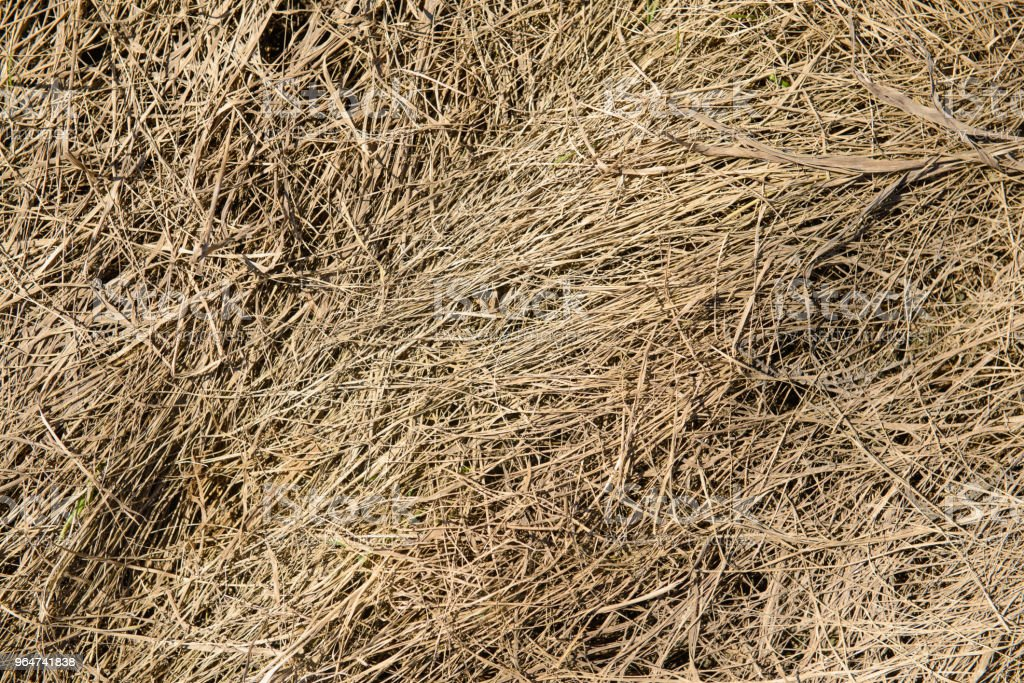 surface of dried grass in the field royalty-free stock photo