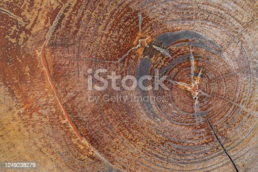 Close-up surface texture of old wooden furniture with tree year circle for background.
