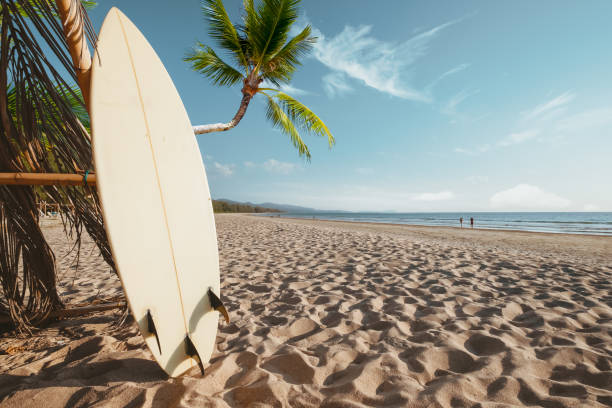 Surfboard and palm tree on beach background. stock photo