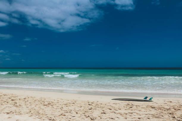 surfbrett am leeren strand - shell tattoos stock-fotos und bilder