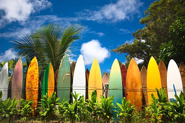 pranchas de surf - angiospermas imagens e fotografias de stock