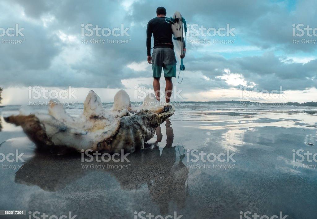 Surfer and a big seashell stock photo