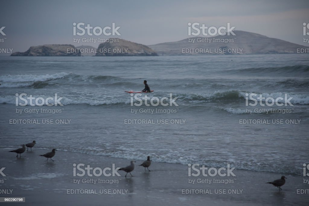 Surfer coming out of the water at a beach in Lima, Peru stock photo
