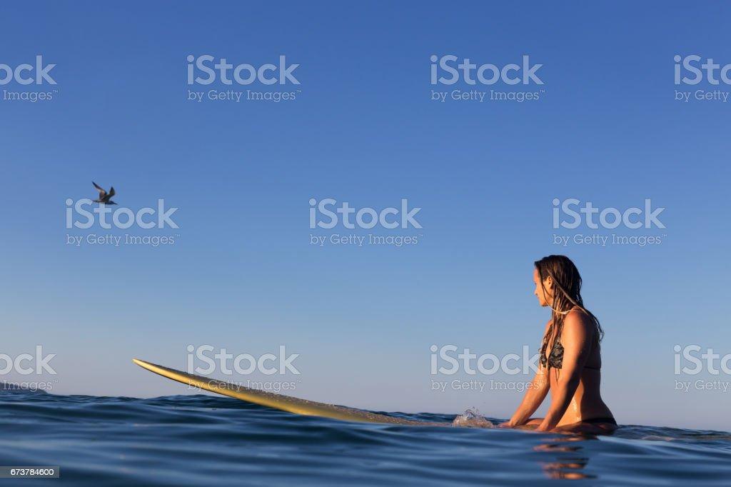 Sörfçü kız ve kuş royalty-free stock photo