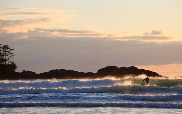 Surfer in Tofino With Beautiful Backlighting stock photo