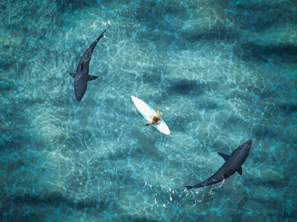 surfer von zwei haien umgeben. drohne-ansicht. 3d-rendering - digital surfer stock-fotos und bilder