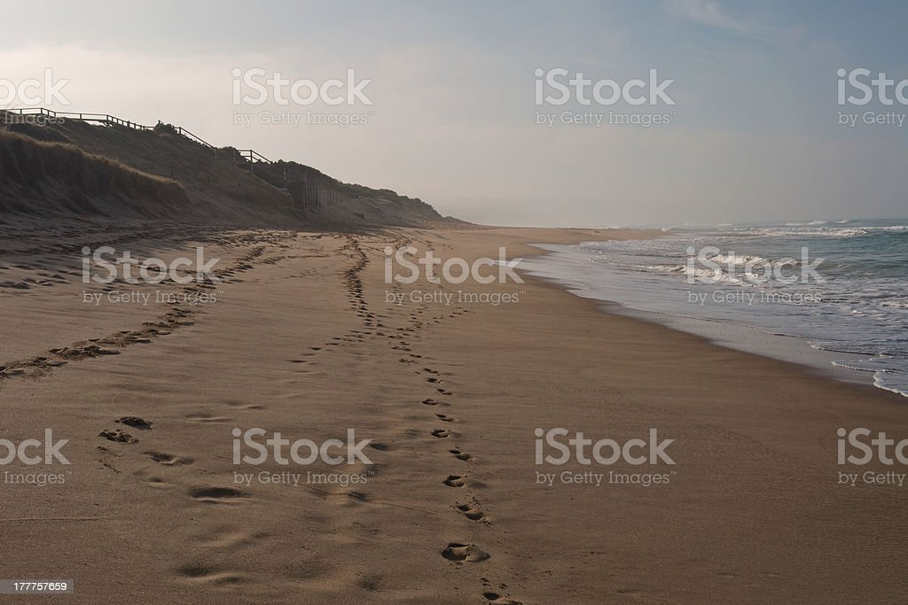 Surfing beach in dusk royalty-free stock photo