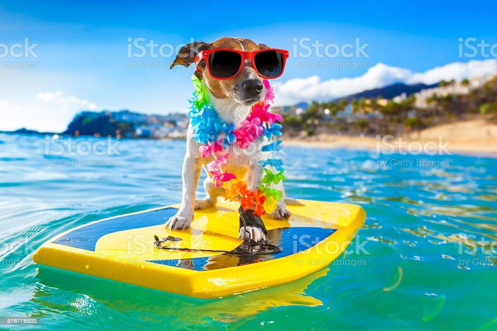 surfing dog stock photo