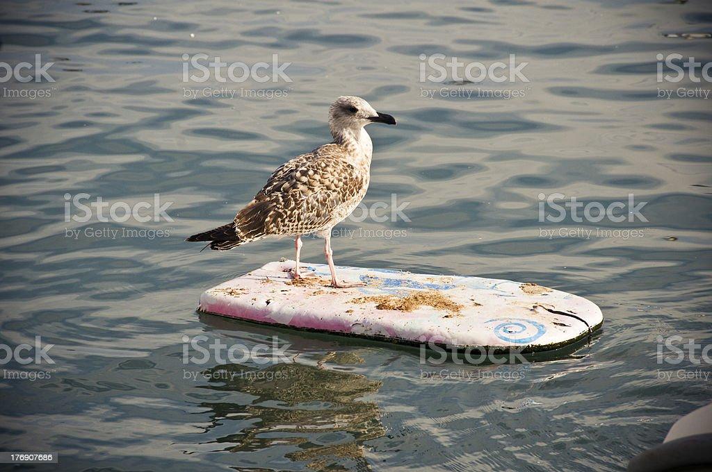 Surfing seagull stock photo