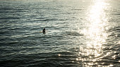 Man swimming on surfboard in sunset rays heading towards sparkling sunset rays