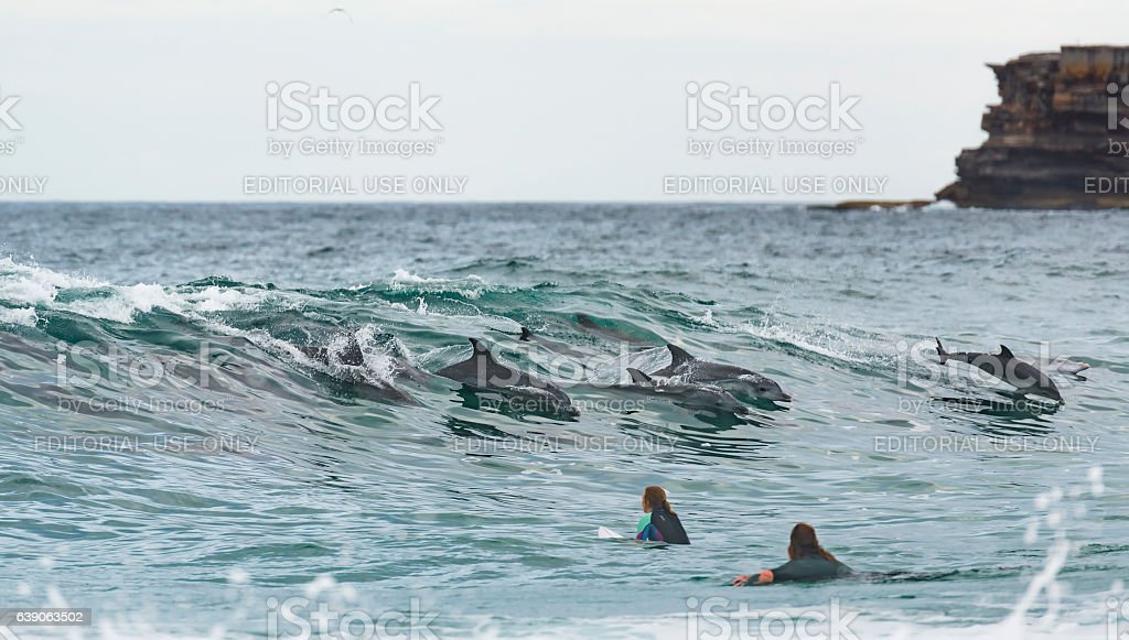 Surfing with dolphis stock photo