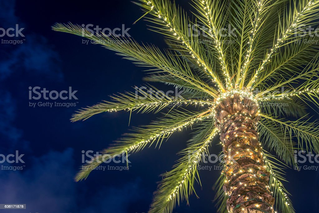 Surfside Florida Tropical Winter Palm Tree Decorated With Christmas