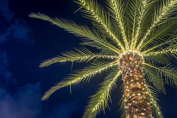 surfside florida tropical winter palm tree decorated with christmas lights stock photo