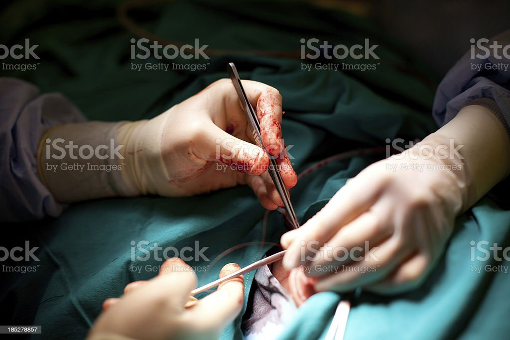 Surgeon Hands stock photo