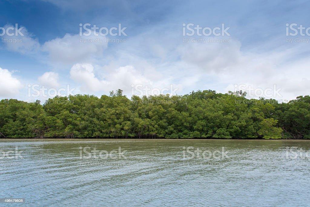 Suriname riverbanks stock photo