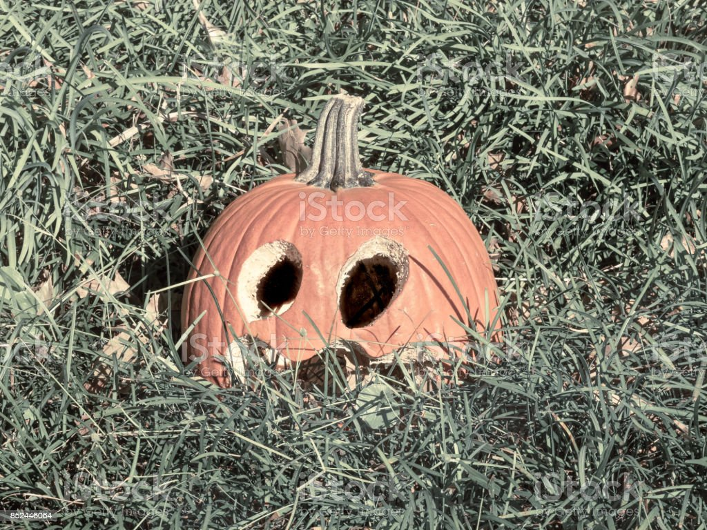 Surpised Halloween Pumpkin in the Grass stock photo
