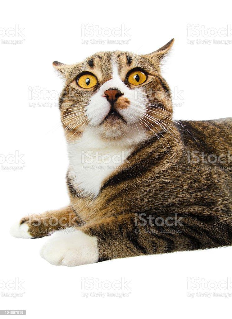 surprised cat stock photo