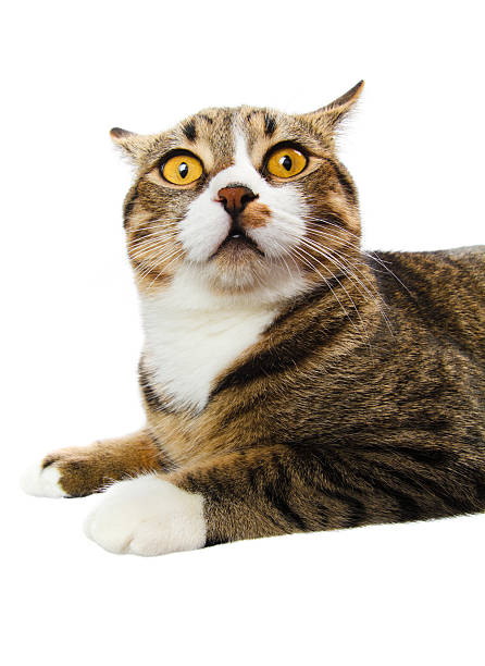 surprised cat  scared cat stock pictures, royalty-free photos & images